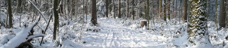 Der Städtlerwald im Winter